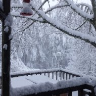 snow 2012 feb VanFossen home forest (10)