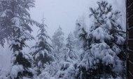 snow 2012 feb VanFossen home forest (11)