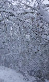 snow 2012 feb VanFossen home forest (12)