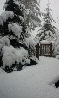 snow 2012 feb VanFossen home forest (2)