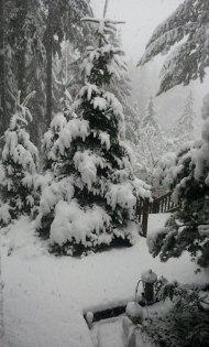 snow 2012 feb VanFossen home forest (5)