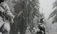 snow 2012 feb VanFossen home forest (6)