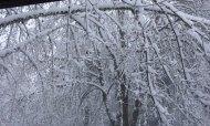 snow 2012 feb VanFossen home forest (7)