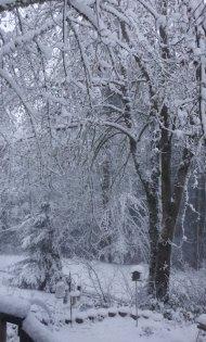 snow 2012 feb VanFossen home forest (8)