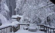 snow 2012 feb VanFossen home forest (9)