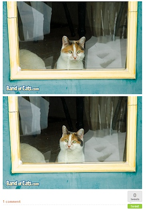 Two photographs of a cat looking out the window of a house, from Band of Cats site.