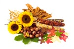 autumn flowers and nuts