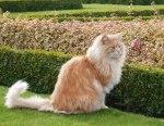 cat on lawn