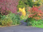 fall color path in forest